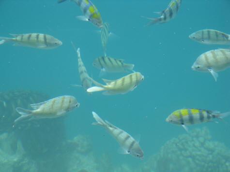 Sealife park near waikiki beach waikiki hawaii for Tropic fish hawaii